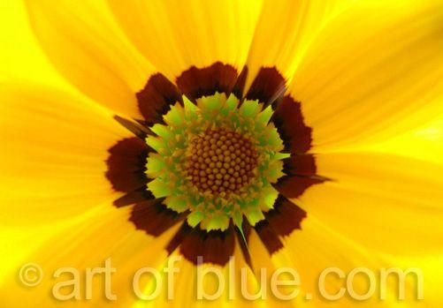 Grusskarte Zigeunerblume P213