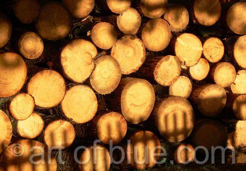 Grusskarte Holzstapel P155