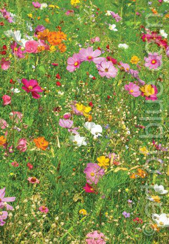 Grusskarte Blumenteppich P262