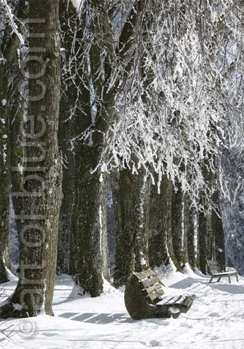 Grusskarte Parkbank im Winter P282