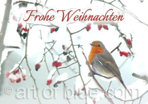 Weihnachtskarte Rotkehlchen P270