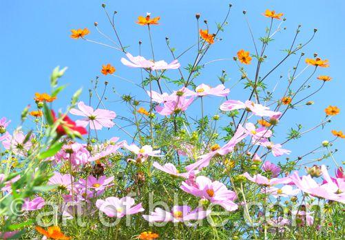 Grusskarte Blumenwiese P278