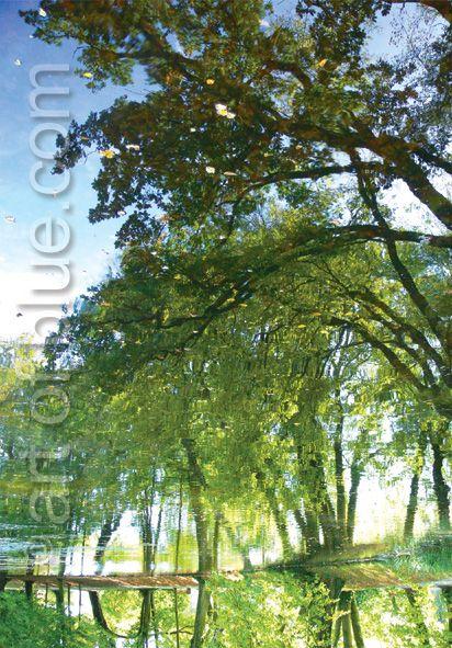 Grußkarte Spiegelnde Bäume P731