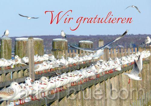 "Grusskarte ""Wir gratulieren"" Möwen p294"