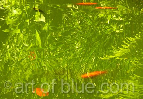 Goldfische kunstpostkarte art of blue gru karten die for Goldfische winter teich