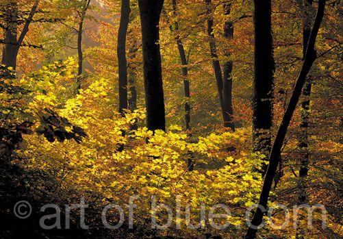 Grusskarte Herbstwald P178