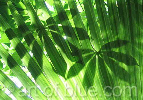 Grusskarte Dschungelgrün P113