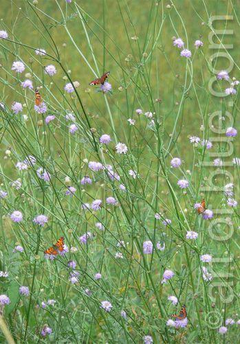 Grusskarte Schmetterlinge P195