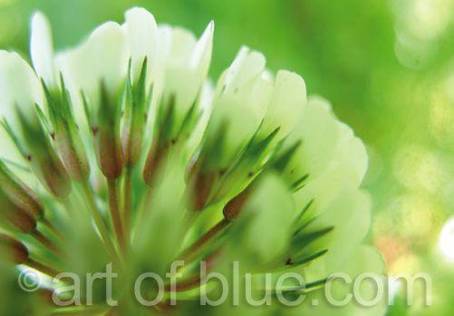 Grusskarte Kleeblüte P226