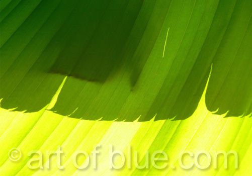 Grusskarte Banane Blätter P142