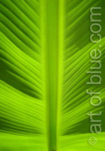 Grusskarte Bananenblatt P159