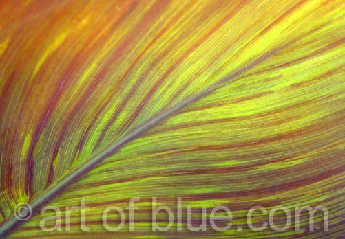Grusskarte Canna tropicana P020