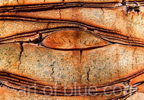 Grusskarte Palmenauge P052