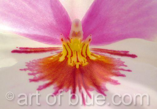 Grusskarte Orchidee Snowfire P117