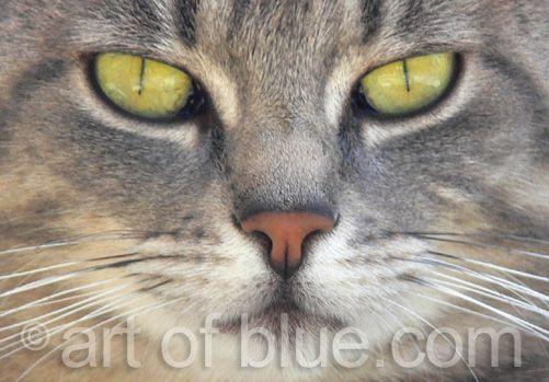 Grusskarte Katze P254