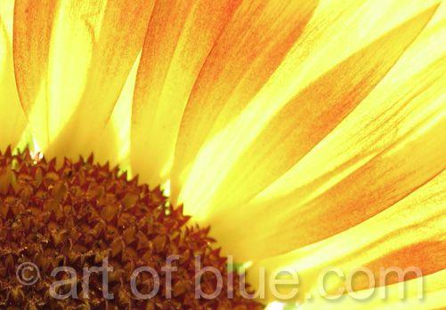Grusskarte Sonnenblume P055