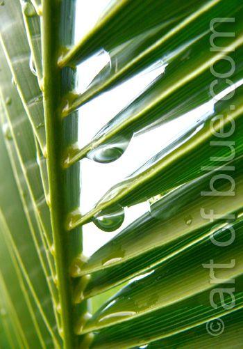 Grusskarte Palmenblatt P160