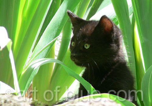 Grusskarte Kätzchen im Grünen P240