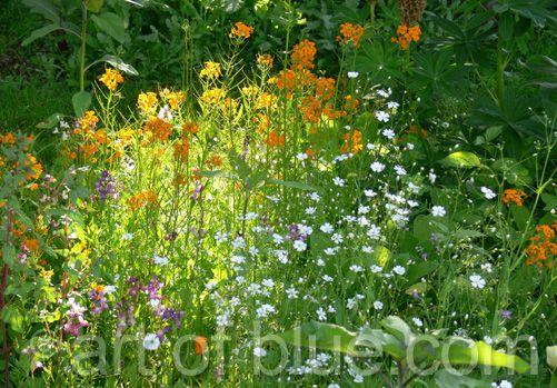 Grusskarte Blumenwiese P200