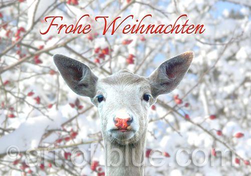 Weihnachtskarte Hirsch P271
