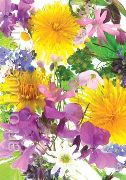 Grusskarte Wildblumen P283