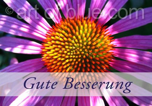 Grusskarte Gute Besserung Echinacea p455