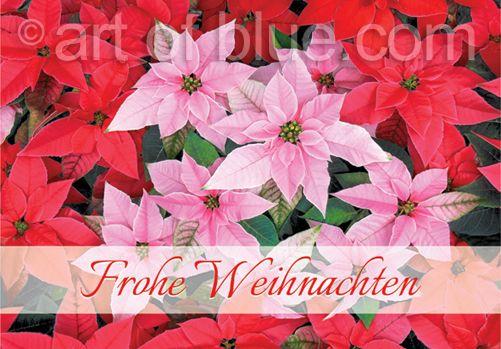 Grußkarte Weihnachtsstern p288