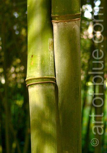 Grusskarte Bambus P165
