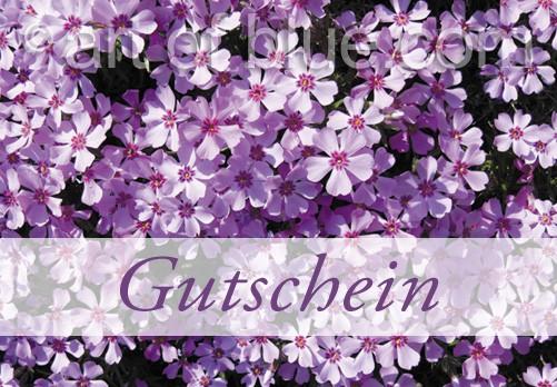 Grusskarte Gutschein Teppichphlox p420
