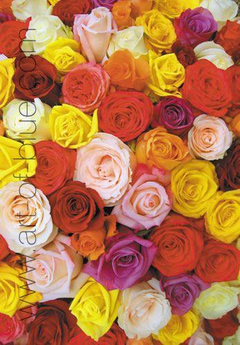 Grusskarte Rosen Bouquet P707