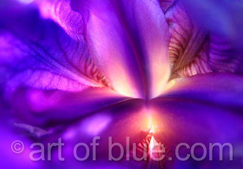 Grusskarte Iris Trojana p079