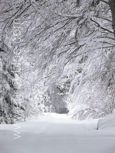 Große Grusskarte Schneewald p805