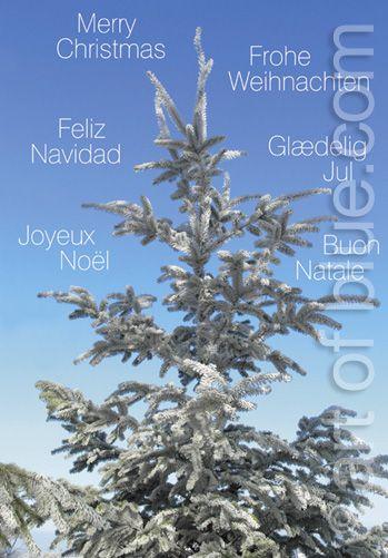 Weihnachtskarte Fichte mehrsprachig P189