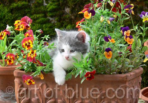 Grusskarte Kätzchen Blumentopf P238
