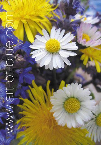 Grusskarte Wildblumen P711