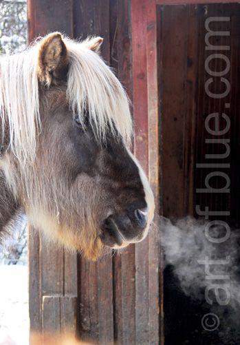 Grusskarte Pony P218