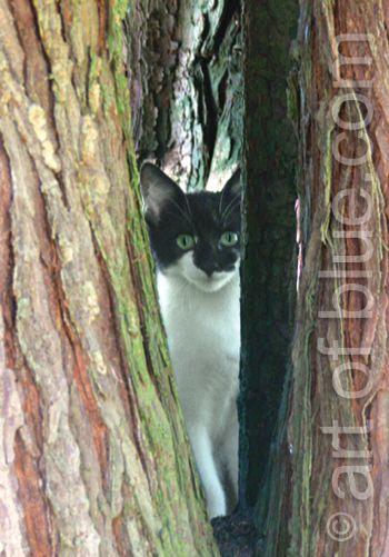 Grusskarte Kätzchen in Baumhöhle P275