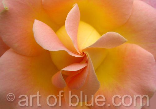 Grusskarte Rose Inspiration