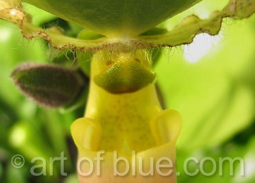 "Grusskarte Orchidee ""Paffi"" P030"