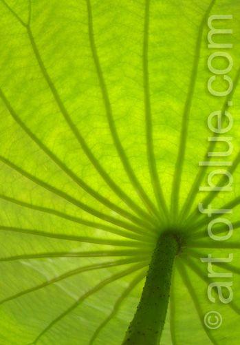 Grusskarte Lotusblatt P040