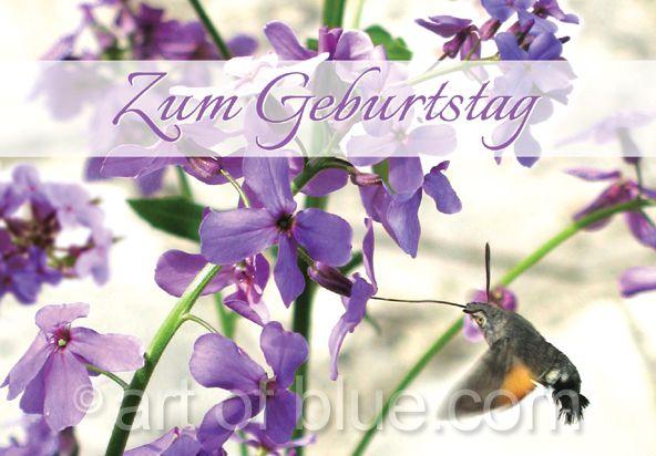 Grusskarte Kolibri Zum Geburtstag P273