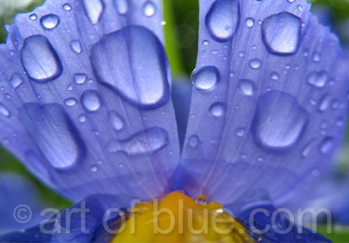 Postkarte Wassertropfen Iris c339