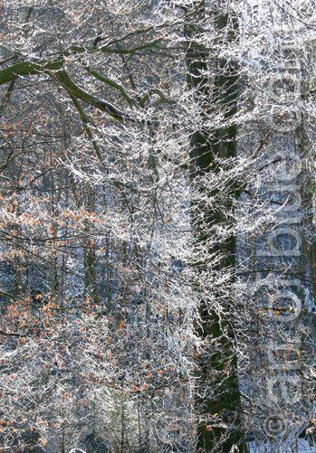 Grusskarte Winterwald p135